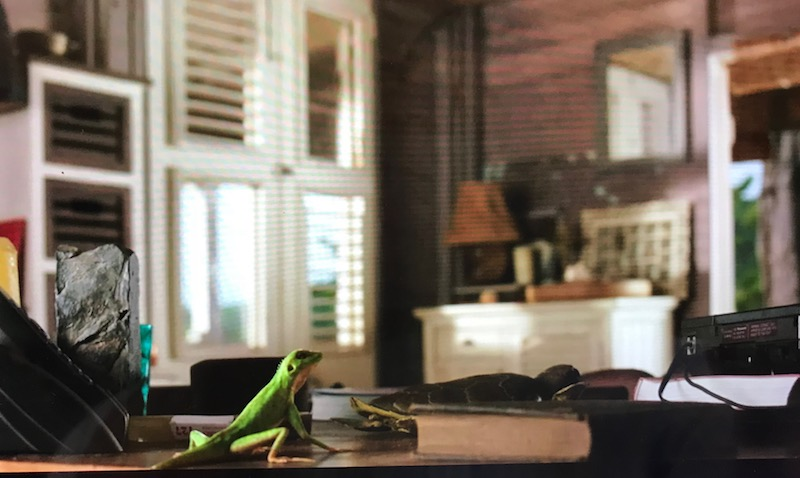 Harry the Lizard on the desk, by the telephone