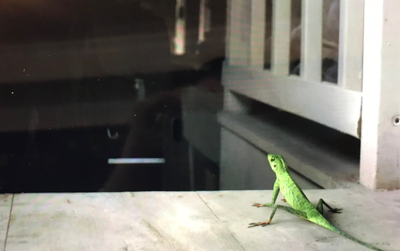 Harry the Lizard at the top of the stairs