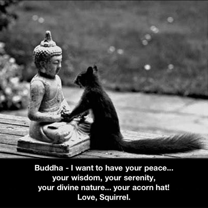 Squirrel asking for some Buddha wisdom | alvinalexander.com