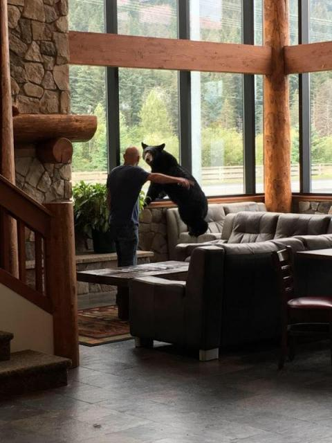 Bear walks into the Breeze Inn, Seward, Alaska