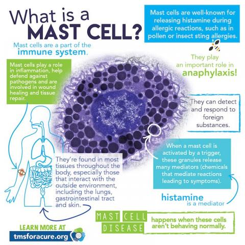 Great printable infographics on mast cell disease