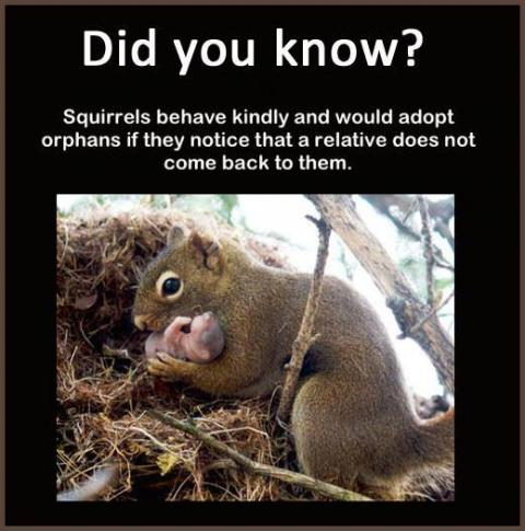 Was I adopted by a squirrel?
