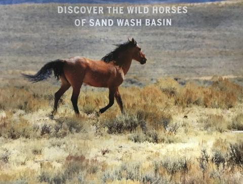 The wild horses of the Sand Wash Basin