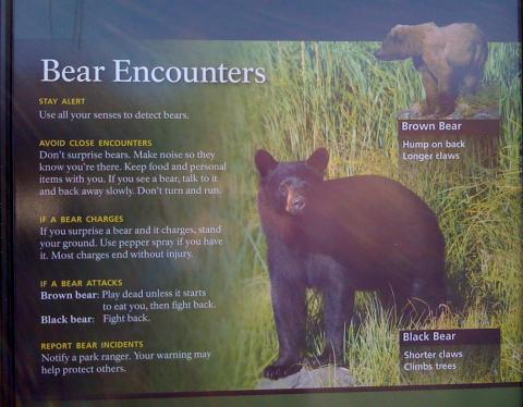 bear safety sign in Alaska