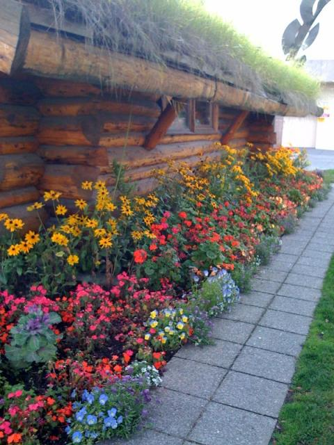 Flowers and a grassy roof, the Visitor's Center, Anchorage, Alaska