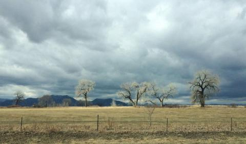 Louisville, Colorado: White trees on a cloudy day