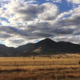 Cattle, field, and mountains near Golden, Colorado