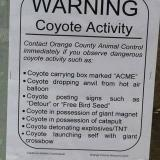 Warning, coyote activity