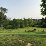 Two horses in Kentucky