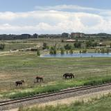 The neigh-bors (horses in Broomfield, Colorado)