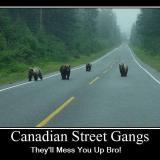 Canadian street gangs will mess you up